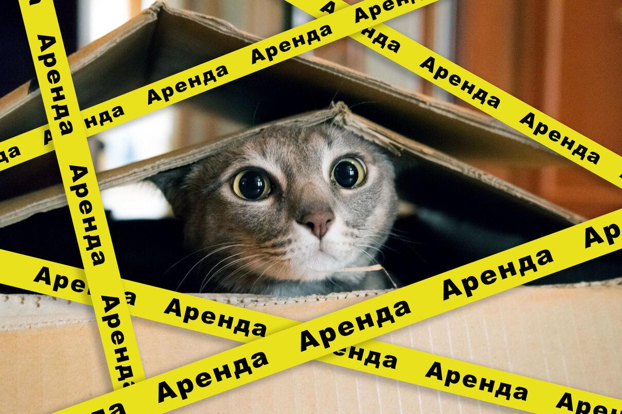 Аренда жилья в Беларуси. 7 актуальных проблем.